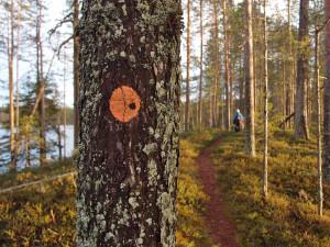 Karhunpolku Pitkäjärven harjulla