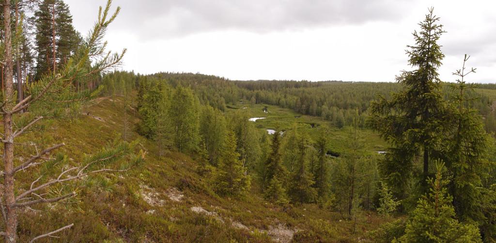 Maisema harjulta Majoanniityille, keskellä polveilee Porrasjoki.