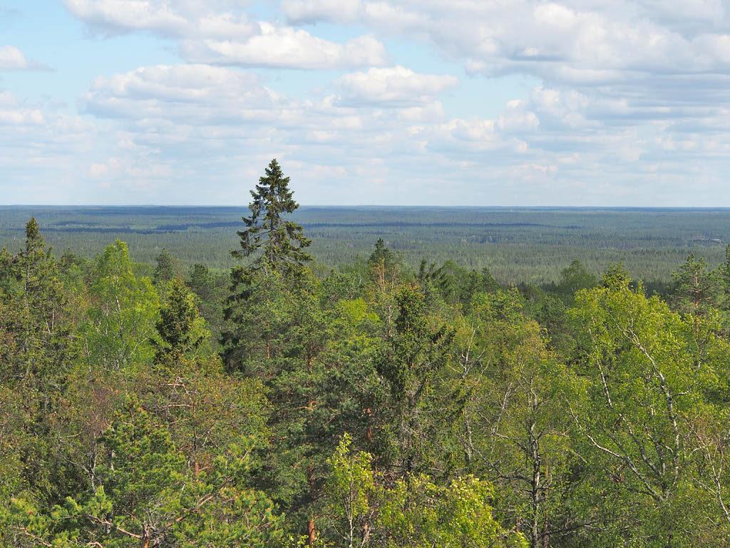 Lauhanvuoren tornista on avarat maisemat joka suuntaan. Jossain horisontissa sijaitsee Kauhanevan-Pohjankankaan kansallispuisto.